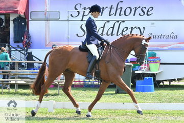 Janet Seccull is pictured getting out and about with her beautiful five year old, 'Bloomfield Vegas' by Versace. The successful dressage rider realises the benefit of experience. The day achieved its purpose and they took third place in the Newcomer Large Hack Championship.