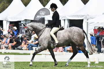 Daizi Plumb rode Robyn Parker's, 'DP London' to claim the 2020 Barastoc Newcomer Large Galloway Championship. London was bred by Dale Plumb and is by Mirinda Field of Dreams out of a Thoroughbred mare.