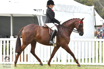 Briony Randle rode Judy Ivory's, 'KP Simply Exquisite' to claim the Barastoc 2020 Large Galloway Championship.