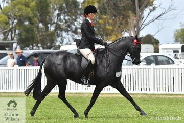 Shelley Howard rode Diane Banks', 'Wideacre Prince George' to make Top Ten in the strong Small Galloway Championship.