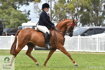Holly Dalgleish rode her lovely, 'Monrose Park Music Man' to make Top Ten in the Barastoc 2020 Small Galloway Championship.