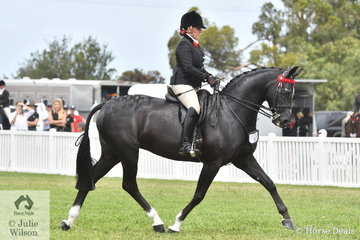 A very busy Briony Randle rode her eye catching mare, 'Santa Fe MD' to take third place in the Barastoc 2020 Small Hack Championship. Champion, Reserve and third all get a run at the Nationals in December.