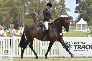 Greg Mickan yesterday took out the Newcomer Large Hack Championship with Georgie Kellock's outstanding Furstenball mare, 'Total Fashionista' and today completed the double by claiming the Barastoc 2020 Large Hack Championship.