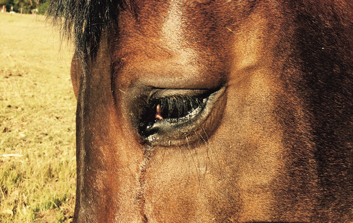 Excessive tearing and watering of the eye is one of the symptoms.