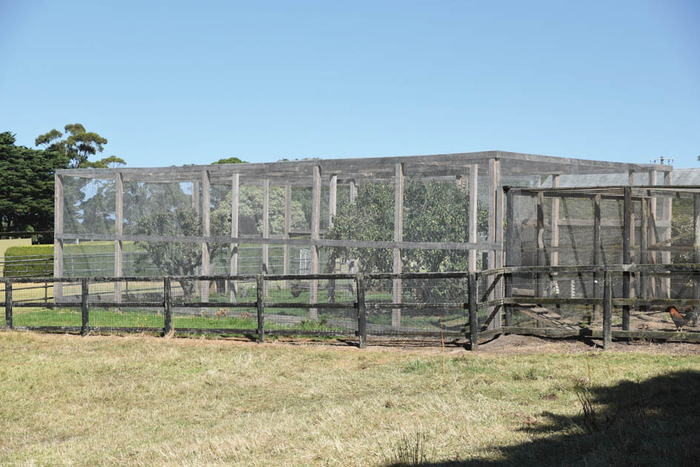 The large and active chook house has two apple trees growing in it.