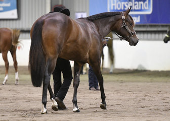 Clairveaux Good N Sudden with Pam Jones, showing in the Amatuer Quarter Horse mare 2 years and under