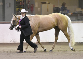 Debi Ploeger and Imas Priority Seeker in the Amatuer Quarter Horse mare  3 years and over.