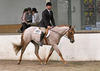 RE Makeumissme riden by Dean Grass in the 3 year old Hunter Under Saddle.