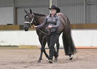 RQH Rock Me Steady and Brooke Ritchie in the Novice Amateur  Showmanship.