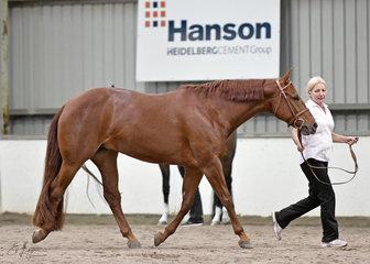 Triandibo Super Diva and Lynda Cavello in the Senior Horse Hunter In Hand