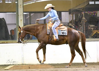 Zip Some Moore shown by Rachel Elliot in the Amateur Trail class.