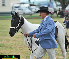 Best presented pinto at the Killarney Show was Gossup Girl with handler Dale Lindley.