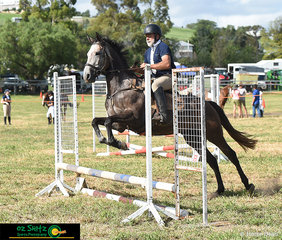 David Barman taking Stolen Dance for non-competitive jump around in the first class at the 2020 Killarney Show.