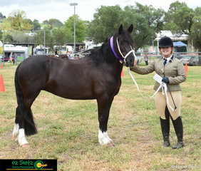 CWM Karen Bren Hindif took the title of Champion Welsh Pony with handler Holly Wilkie at the 2020 Killarney Show.