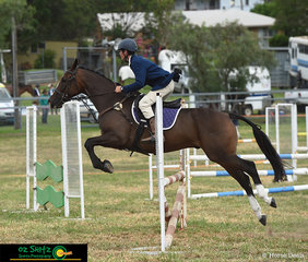 Straight from the Australian Stock Horse Hack arena into the 90cm Show Jumping arena was Campbell Shenfield on Grady's Beau at the Killarney Show.