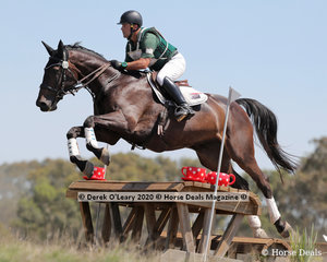 """Terry Delbridge placed 2nd in the EVA95 Section C riding """"Snowy River Romaunt"""" with a final score of 28.30"""