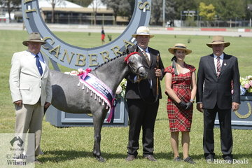Stuart Robinson led the Suburban Lodge Training and Show Stables, Margie Whyte and the Robinson Family nomination, 'Koora-Lyn Charmind' to be declared Champion Part Welsh Mare. She went on to claim the Jill Grant Memorial Prize for Supreme Led Part Welsh Pony. Pictured L-R Robert Grant, Stuart Robinson, Brooke Stevenson and judge, Stuart Ryan.