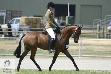 Liz Gregory's, 'Daisy Patch English Affair' took fourth place in the class for Ridden Part Welsh Mare/Gelding/Stallion 13.2-14.2hh.