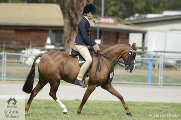 The Hughes Family, Ella Smith and Malcolm and Linda Berben's nomination, 'Denhue Royal Design' won the class for Ridden Part Welsh Mare/Gelding/Stallion N/E 12.2hh.