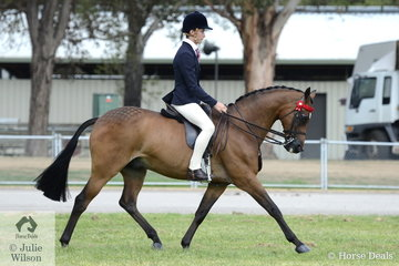 Tyler Kelly took second place in the class for Ridden Part Welsh Mare/Gelding/Stallion 13.2-14.2hh riding his  well performed, 'Chippenham Zulu' and went on to claim the Ridden Part Welsh Reserve Championship.