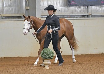 Gunna B Shiney shown in AQHA colt 2 Years by Jessica Young