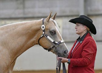 Helen Barnes showing BM Classy Kid in the PHAA Paint bred Filly 3 years and under halter class.