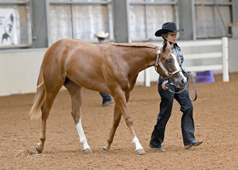 How About A Red shown by Julie Coen in the AQHA gelding 1 Year and Under Halter