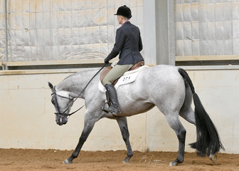 Mazin Couture shown by Natasha Humphries,  on the way to winning the 3 year and over Maiden Hunter Under Saddle