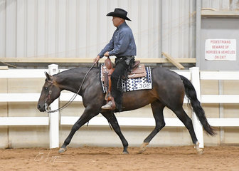 Kerry Crib and  Classic Genetics in the Open Ranch Riding.