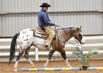 DGS Rocka Song and Darren Sinclair in the Amateur Senior Horse Trail.