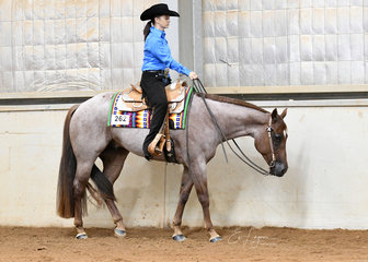 Jodi Jakubenko showing Dont Kiss N Tell in the 3 year old and Over Maiden Werstern Pleasure.
