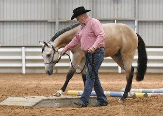 John Steel showing Clairveaux Doin It in the Yearling Led Trail.