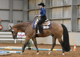 RQH The Wizard, ridden by Cassandra Grainger, in the Select Amateur Trail.