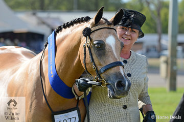 Dianne Arnold claimed the Champion Led Buckskin title with her mare, 'Silhouette Park Kaidence'.
