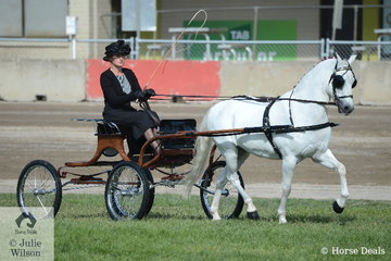 Kelsea Bullivant drove her own and Neil Shipard's successful, 'Lakevale Zipper' to take second place in the class for Non Hackney Viceroy Turnout.