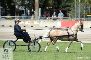 Successful reinswoman, Heidi Stevens is pictured driving Corinne Collins and Andrew James' successful, 'Nawarrah Park Pink Panther' to win the class for Non Hackney Pony 12-13hh.