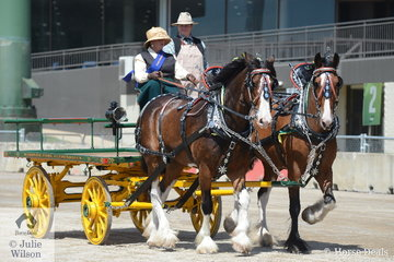 Successful reinswoman, Carolyn Blakeley drove the Blakeley Family's, 'Southern Cross Nickolas and Southern Cross Hamish' to claim the class for Lady/Gent Driver Heavy Horse.