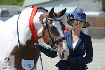 Emily Thompson took second place in the class for Pinto Gelding Over 14hh with her, 'Bremer Park Showman'.