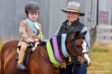 Successful in the beginners ring, Hugh Laird riding Woranora Napoleon, with Mum Lucinda Laird.