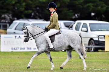Champion small hunter pony. Bamborough Coromba  ridden by Charlie Cartlidge