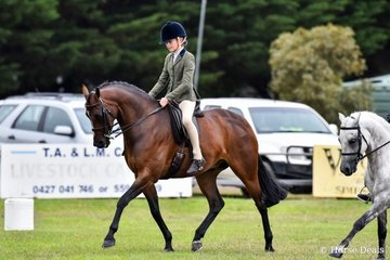 Champion show hunter Galloway Cheraton Be Brave ridden by Shayleigh Joblin