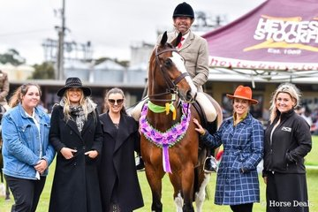 Supreme ridden show hunter. A Welcome Stranger ridden by Brian Scholes. With judges left to right, Georgia kitely, Melody Linehan, Tori Merigold, Sabrina Neave, Jade Sambell.