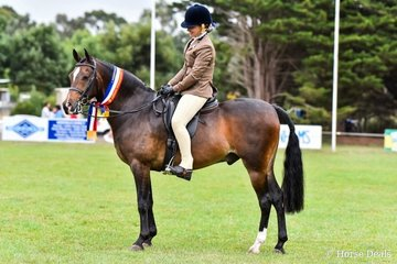 Champion large show hunter pony. Amaranda Titmouse