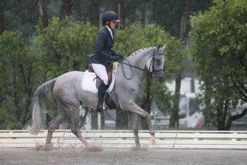 Oso Lancelot in the Purebred Preliminary  1 c