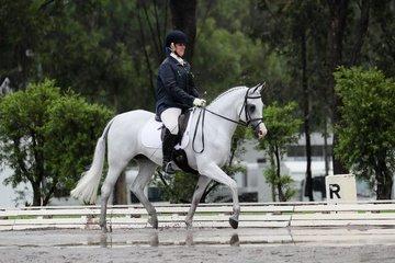 Marbling Novelle Australian Champion Purebred Preliminary Dressage