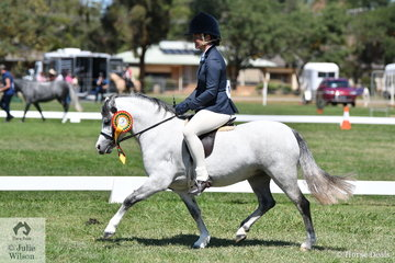 Rachael Amey's, 'Wyann Candy' (Wyann Taurus/W. Sparkleberry) won the class for Ridden Welsh A Hunter Mare/Filly/Gelding and was declared Champion Welsh Hunter on day one of the 2020 Welsh National Show conducted at Tatura Park, Victoria.