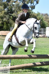 Zoe Bartholomeusz's 'Fairlight Acres Paris' (Fairlight Acres Kestrel/F.A.Partia) is pictured making a loveley jump during the class for Working Hunter 12-13hh.