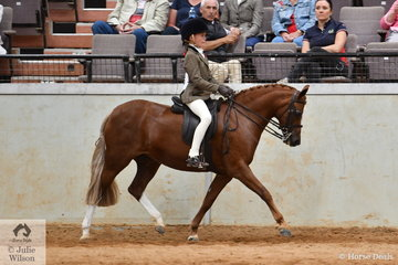Mia Oslands rode Victoria Heywood's, 'Rivingron Zaza[ (R. Vyvyan/R. Zaphria) to win the Kimberley Park Stud'sclass for Ridden Part Welsh Mare/Gelding/Stallion during the second Australian Welsh and Part Welsh Ridden Championship Final.