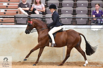 Tamara Lee rode her home bred, 'Tamrie Park Excels Perfection' (Rathowen XL/Torrensway Reflections) to take second place in the class for Ridden Part Welsh 12.2-13.2hh.