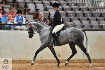 Kristy Marcon rode Di and  Sally Aumann's, eye catching, 'Pemberton KGB' (AEA Tushinski/Buckwell Park Centre Piece) to second place in the Joan McKinley class for Ridden Part Welsh Over 14.2hh.